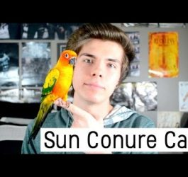 Sun Conure Care and Info!