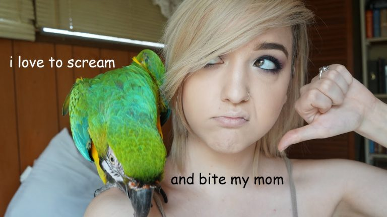 WHAT IT'S LIKE TO OWN A MACAW | Brenna Neal
