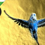Amazing Parakeet Facts