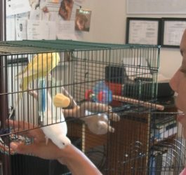 How to Get Your Parakeet to Trust You