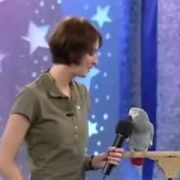 * Einstein the famous talking African Grey Parrot! *