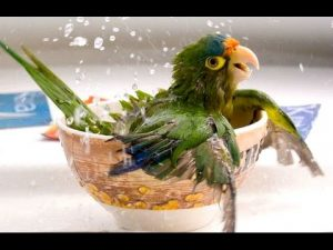 Funny Parrots - A Funny Parrot Videos Compilation 2015
