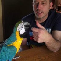 Meet Camaro!  Our 21 Year Old Blue & Gold Macaw