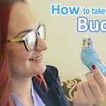How to Take Care of a Budgie, Parakeet | All The Basics and more!