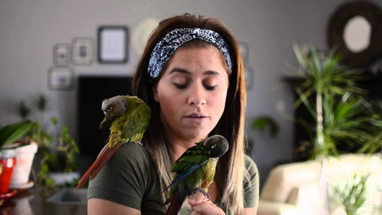 General Information for Conure Avian Anatomy
