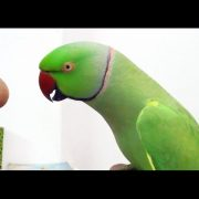Conversation with my parrot,Worlds best Bird