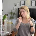 Potty Training a Conure   Basic Intro to Potty Training a Parrot - Part 1