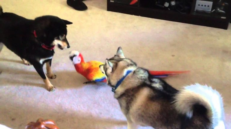 Macaw playing with dog