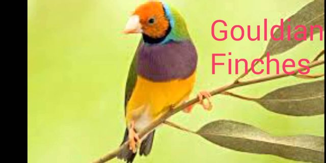 Top 15 Best of Finches Birds