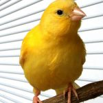 How to Take Care of a Canary & Finch | Pet Bird