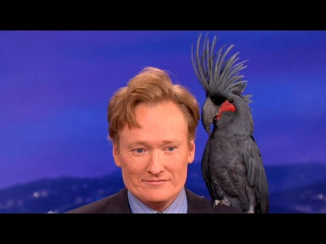 Animal Expert David Mizejewski: Black Palm Cockatoo & Crocodile - CONAN on TBS