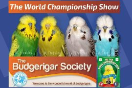 The Budgerigar Society World Championship Show 2016 [Budgie Planet] Exhibition Budgies