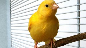 Taking Care Of A Finch And Canary