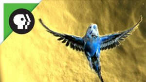 Amazing Parakeet Facts You Should Know